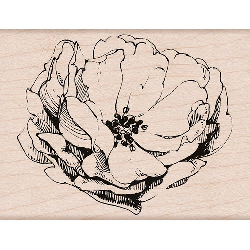 Hero Arts - Antique Rose