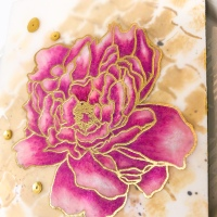 Hero Arts Vellum Peonies