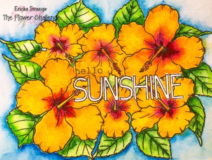 sunshineorg