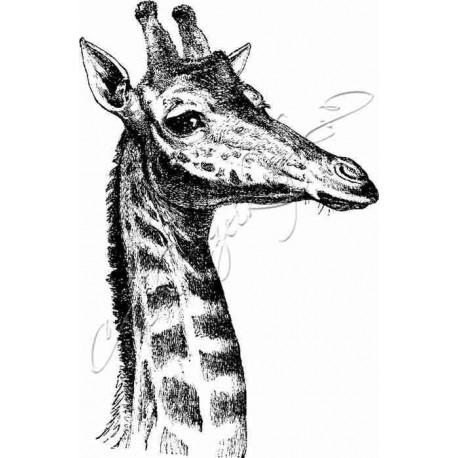 Katzelkraft - Giraffe