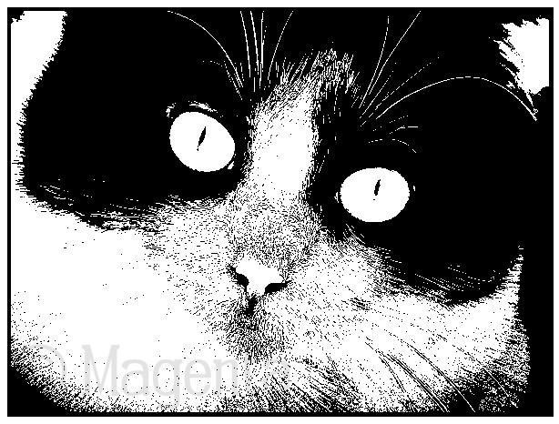 Magenta - Rose Cat