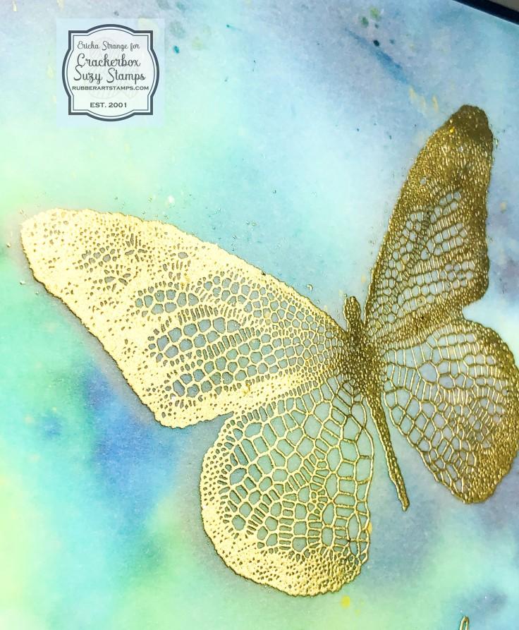 butterflyclose