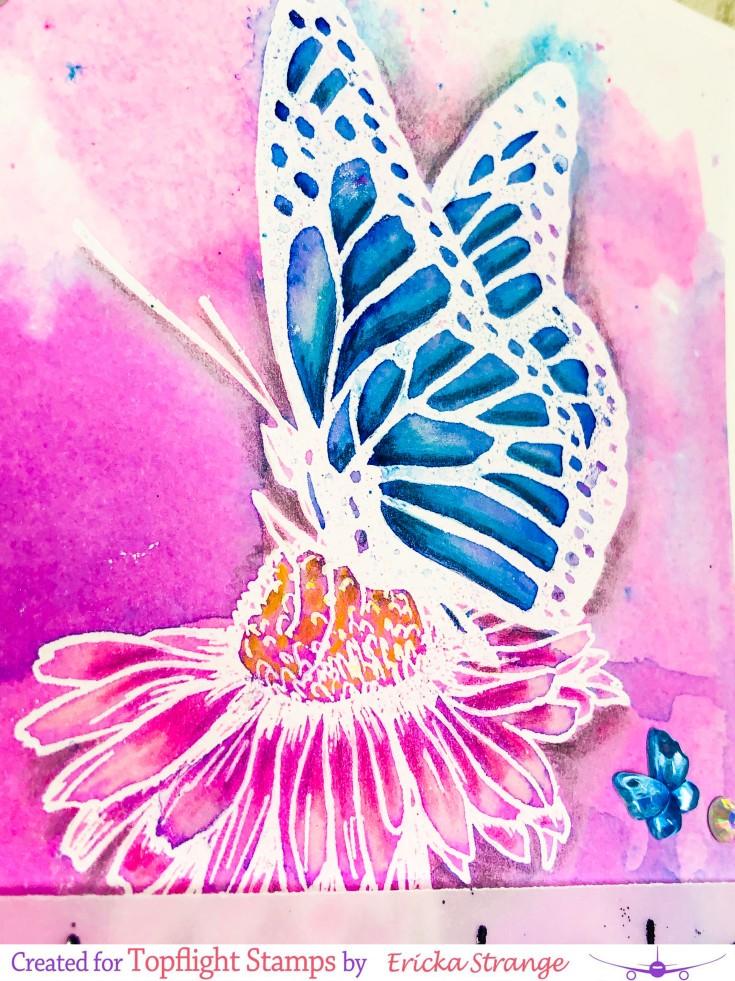 butterflycloseup