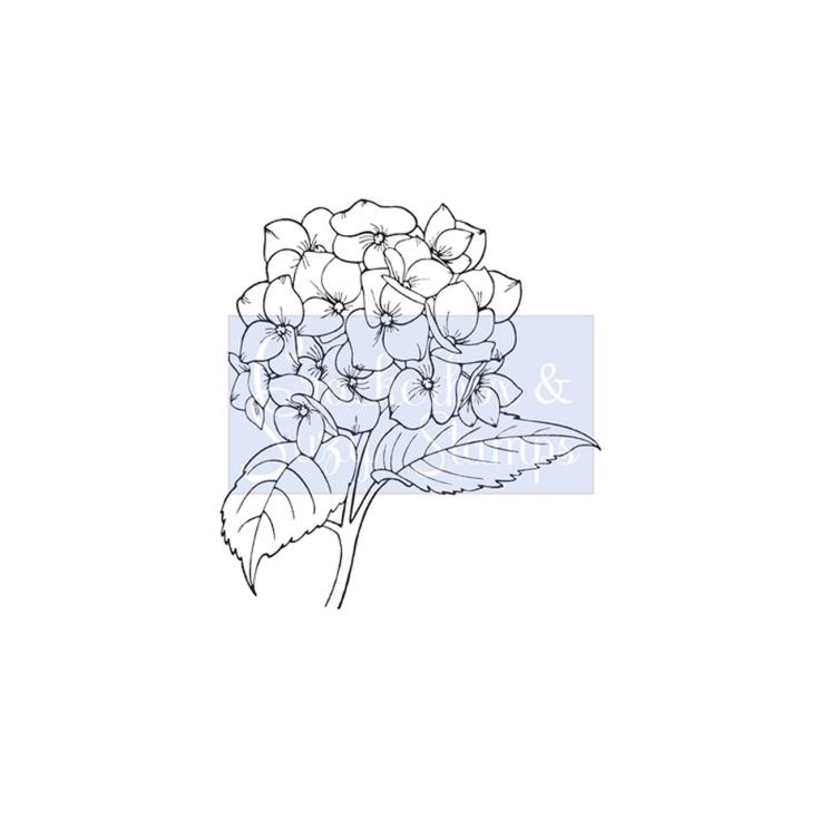 Crackerbox & Suzy Stamps - Hydrangea Lg