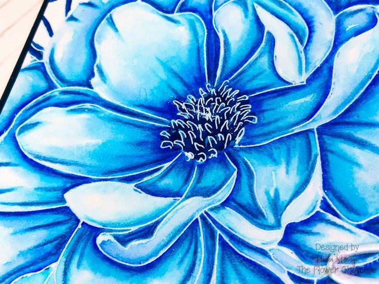 bluecloseup