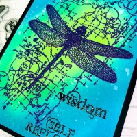 Visible Image Dragonfly Dream