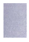WOW! Embossing - Periwinkle